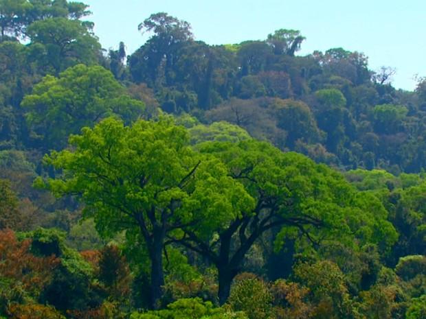 Parque Estadual Vassununga reflete a cobertura florestal do interior paulista (Foto: Felipe Lazzarotto/EPTV)