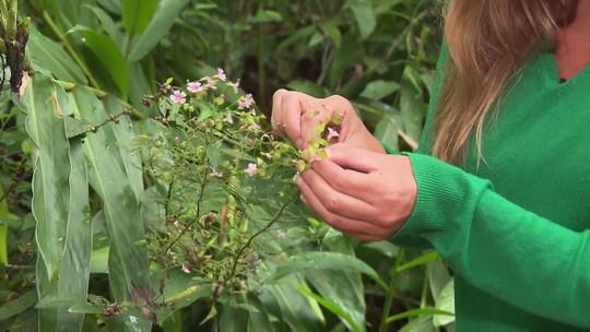 Pesquisadora dá dicas sobre como identificar plantas comestíveis na natureza