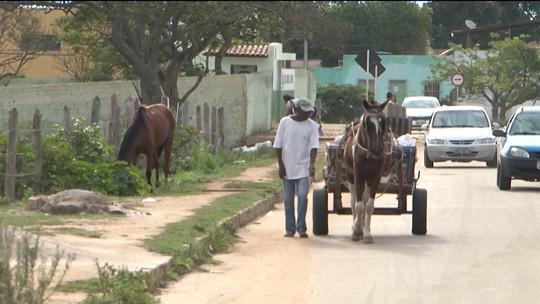 Carroceiros iniciam curso para ter habilitação e conduzir animais em Vitória da Conquista