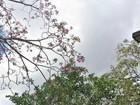 Temperatura não deve ultrapassar 28ºC neste domingo, 3, em Rondônia