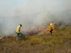 Brigadistas trabalham no controle das chamas (Foto: ICMBio)
