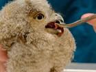 Bebê coruja é resgatado após cair do ninho na Filadélfia