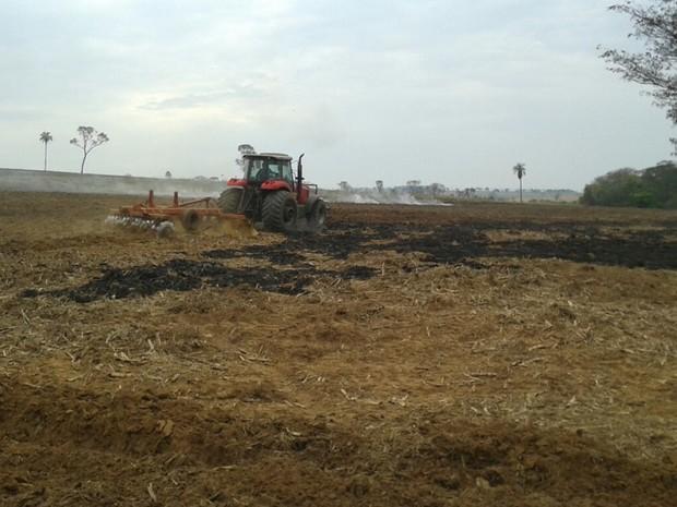 Segundo polícia, foram queimados 15 hectares (Foto: Divulgação/Polícia Ambiental)