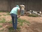 Condenados a penas alternativas fazem mutirão contra Aedes, no ES