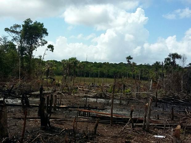 Área desmatada e incendiada fica localizada às margens da Lagoa dos Índios, em Macapá (Foto: Dema/Divulgação)