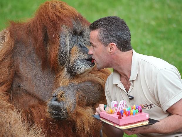 Orangotango2 (Foto: Alain Jocard/AFP)