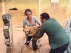 Três cães ilhados são resgatados por voluntários em Caieiras, na Grande SP