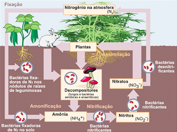 Ciclo do nitrogênio (Foto: Colégio Qi)