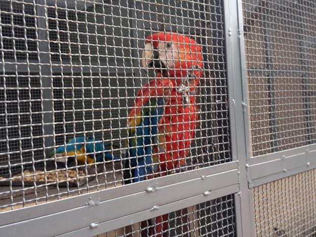 80% dos animais que estão em tratamento no Cetas são pássaros   (Foto: Vanessa Lima)