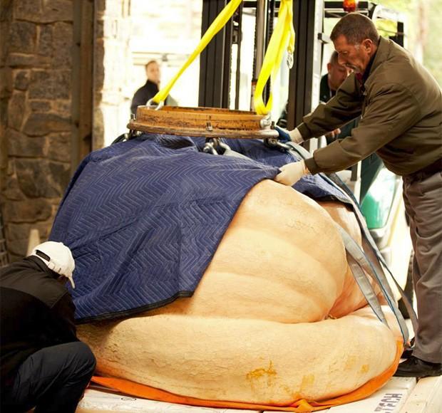 Abóbora gigante cultivada por Tim e Suan Mathison quebrou o recorde mundial com 921 kg (Foto: Reprodução/Facebook/The New York Botanical Garden)