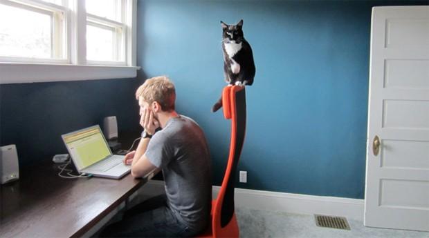 Pets na cadeira: o cômodo escolhido deve se parecer com um escritório (Foto: Photopin)