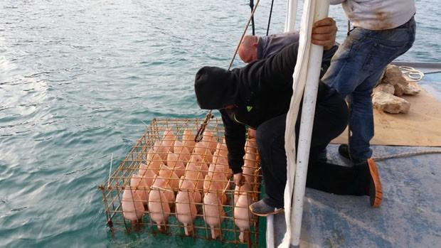 Nesta adega na Croácia, os vinhos ficam submersos no mar (Foto: Divulgação)
