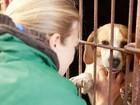 ONG compra cães que iriam virar comida na Coreia do Sul