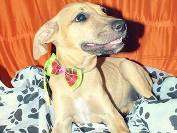 Cão da Ong proteger em Petrolina, PE (Foto: Pamela Durando / Arquivo pessoal)