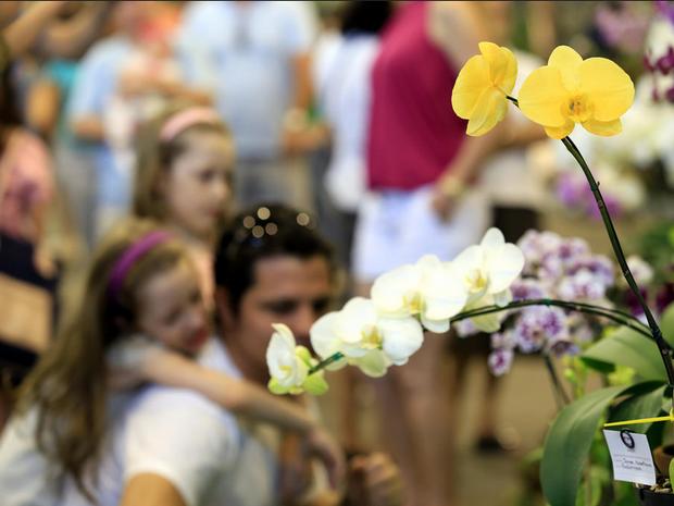 Festa das Flores terminou no domingo (22) em Joinville (Foto: Divulgação)