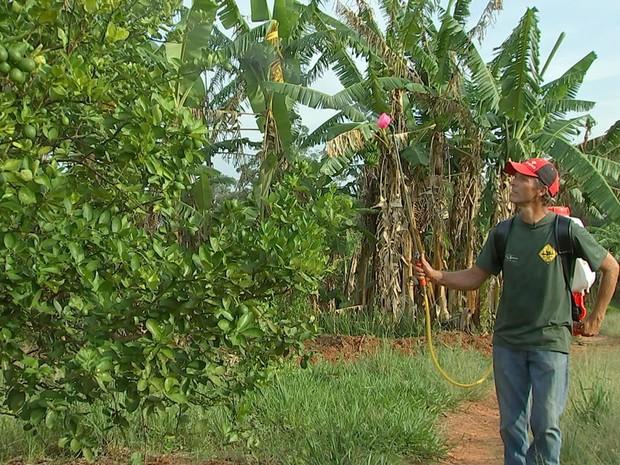 Trabalhar com a prevenção nas hortas e plantações garante hortaliças mais saudáveis (Foto: Reprodução/TV TEM)