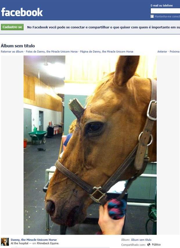 Imagem da comunidade do cavalo Danny mostra como ele ficou parecido com um unicórnio após o acidente. (Foto: Facebook/Reprodução)