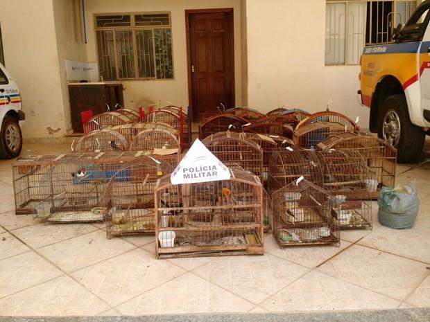 Aves serão levadas para o Cetas, em Montes Claros (Foto: Polícia Militar/Divulgação)