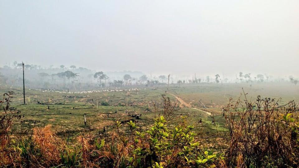 Pecuária e desmatamento se espalha às margens da Transamazônica (Foto: Divulgação/Transamazônica+25)
