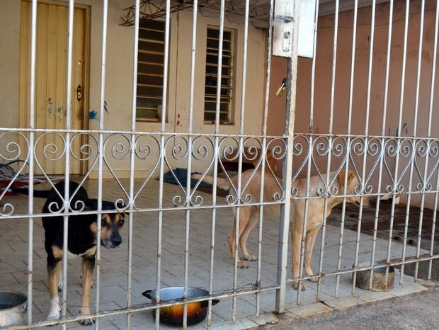 Cadelas ficam em garagem de casa em Piracicaba (Foto: Fernanda Zanetti/G1)