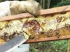 Mesmo com safra ruim, apicultores podem aumentar produção no Paraná
