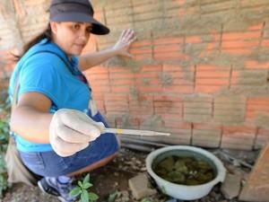 Profissional durante ação contra dengue em Campinas (Foto: Fernanda Sunega/ PMC)