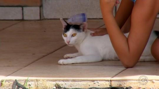Matança de gatos com sinais de envenenamento assusta moradores