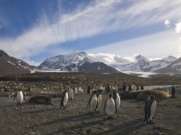 Imagem de parte da ilha Georgia do Sul, onde vivem animais como pinguins e elefantes-marinhos (Foto: Gettyimages)
