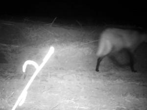 Câmeras ajudam a monitorar áreas de preservação da Ulfa (Foto: Reprodução EPTV)