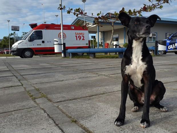 Cão está no pátio do hospital desde novembro (Foto: Luiz Souza/RBS TV)