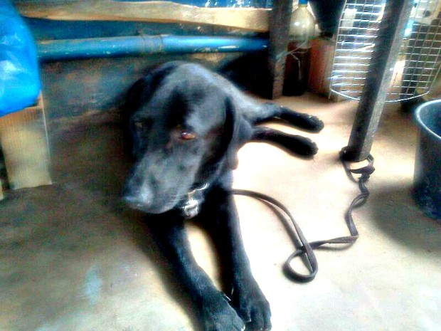 Cão farejador ajudou a polícia a encontrar um dos esconderijo usados pelo suspeito (Foto: Divulgação/Polícia Militar)