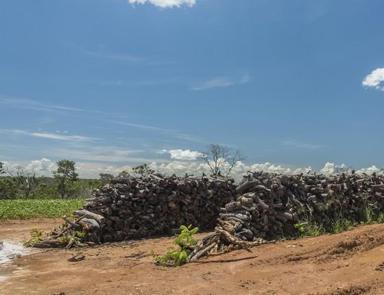 Desmatamento no Cerrado (Foto: WWF)