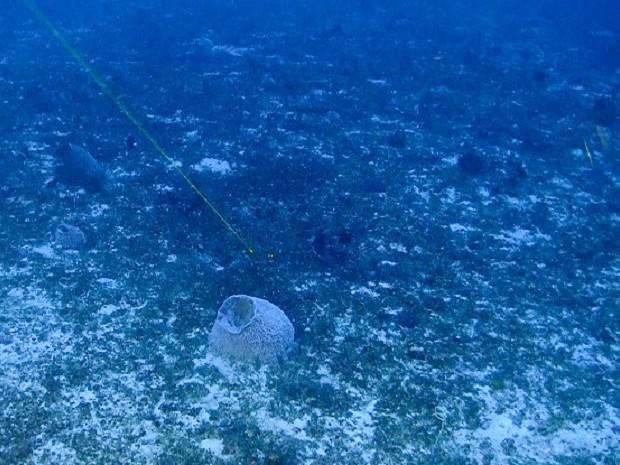 amapá; macapá; greenpeace; corais; (Foto: ©Greenpeace)