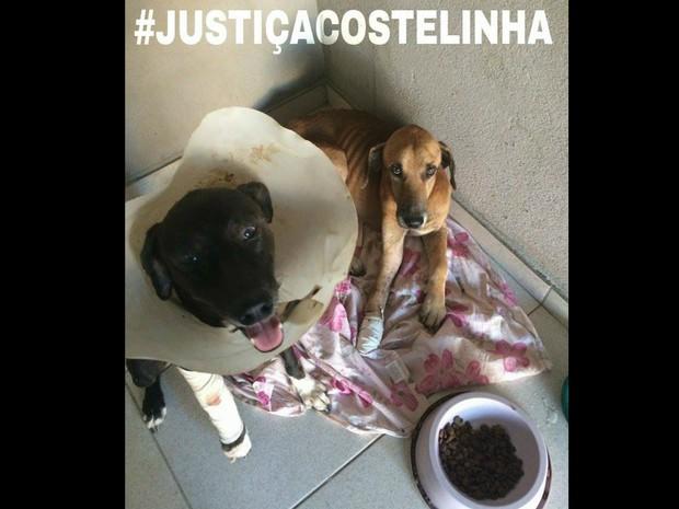 Internautas postam fotos de animais de estimação nas redes sociais pedindo justiça (Foto: Reprodução/Facebook)