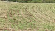 Agricultores da região Norte preparam espaço para plantio da safra de milho