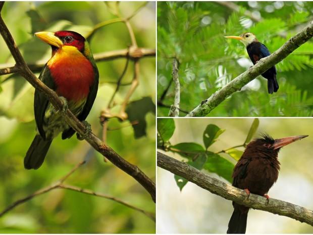 Capital acreana abriga ao menos cinco pontos onde é possível observar aves (Foto: Ricardo Plácido/Arquivo pessoal)