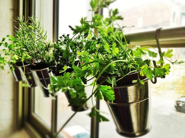8 dicas para a sua horta dar certo de primeira (Foto: Reprodução)