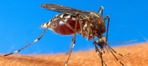 Resultado de imagem para DF registra queda de mais de 90% nas suspeitas de dengue em 2017