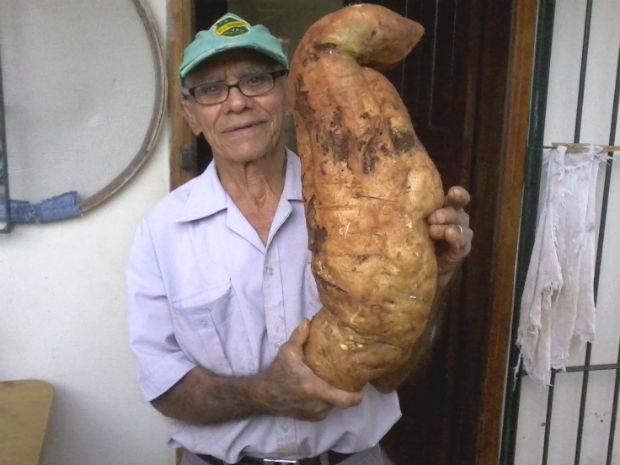 Produtor rural colheu tubérculo gigante em Jaú (Foto: João Barreto/VC no G1)