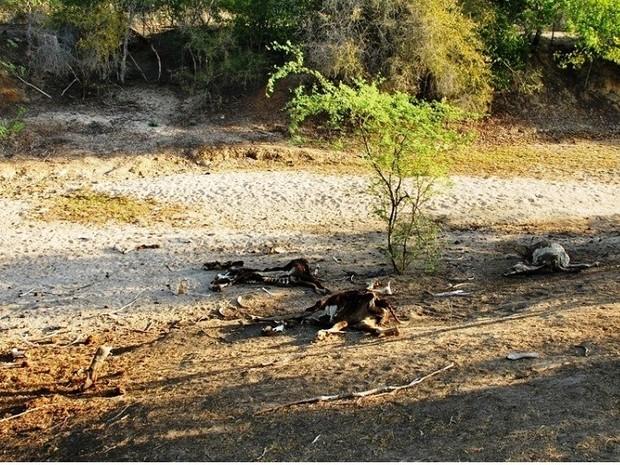 Rebanho da região foi reduzido em mais da metade (Foto: Emater/Divulgação)