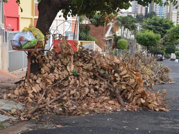 Galhos secos tomam parte de rua no Jardim Paulista, em Ribeirão Preto. (Foto: Fernanda Testa/G1)