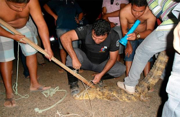 Segundo a PM, animal deu trabalho para ser capturado  (Foto: Humberto Nobre)