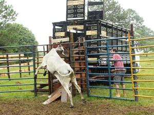 Animais foram apreendidos em Florianópolis (Foto: PM/Divulgação)