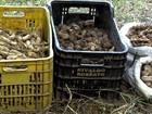 Sistema de agrofloresta é aposta para a reestruturação de fazenda em SP