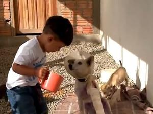 Cadelinha se recupera após ataque de rottweilers (Foto: Reprodução/RBS TV)