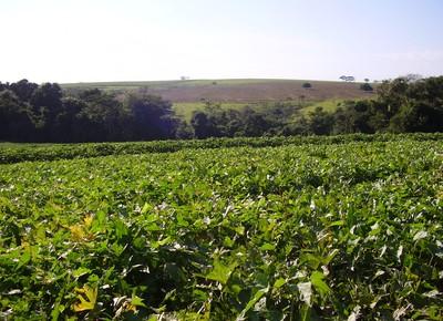 agricultura_plantacao_batata_doce (Foto: Arquivo Apta)
