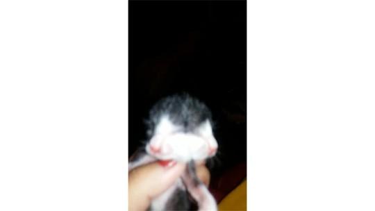 Gato nasce com duas faces em Jacareí; assista vídeo