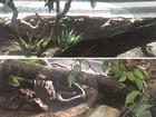 Zoo de Goiânia teve 9 cobras furtadas que valem até R$ 33 mil, diz polícia