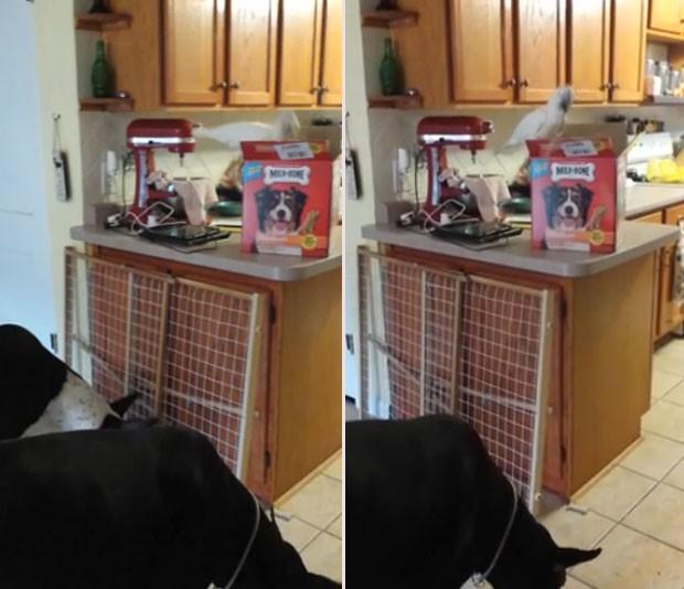 Cacatua-branca foi filmada alimentando dois cães (Foto: Reprodução/YouTube/rrry1950)