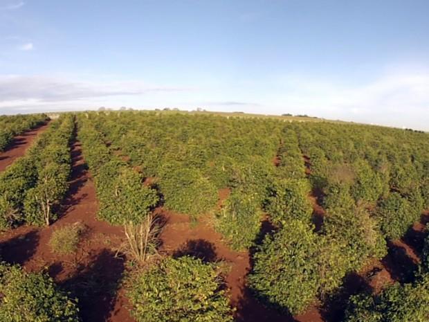 Paraná foi o maior produtor de café do Brasil na década de 1960 (Foto: Reprodução/RPC)